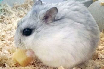 ネズミもコクが好き(※写真はイメージ)