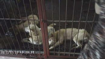 韓国・犬肉