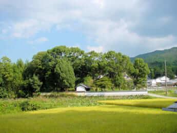 日韓「半島外交」失敗の歴史で見える「中臣鎌足」の正体 国際人のための日本古代史()