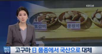 「サツマイモ三銃士」の活躍として、日本品種ではなく国産品種を取り上げる